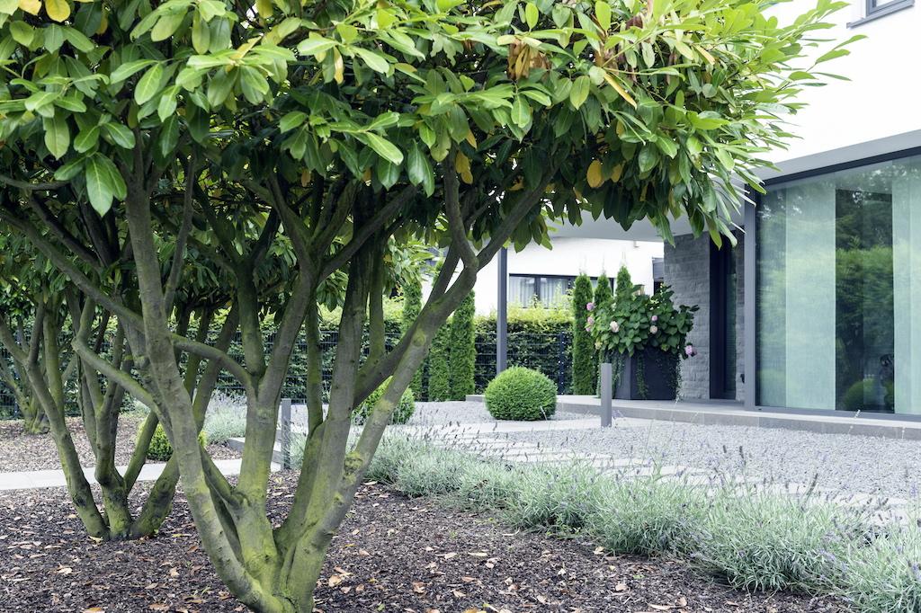 Kleinbäume wie die Kugelsumpfeiche sorgen auch in kompakten Gärten für adäquaten Bewuchs