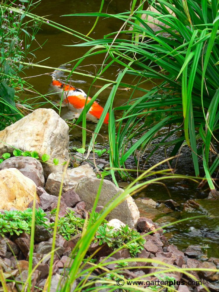Fotos: Gartenplus