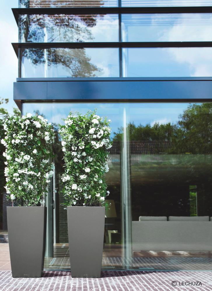 Die blühenden Sommerjasmin sind auch von Innen ein Blickfang und wirken wie ein grüner Vorhang